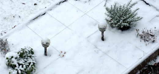 Herb Garden in the Snow